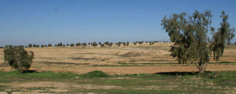 View from Bedouin village of Al-Araqeeb, JNF trees on the horizon.